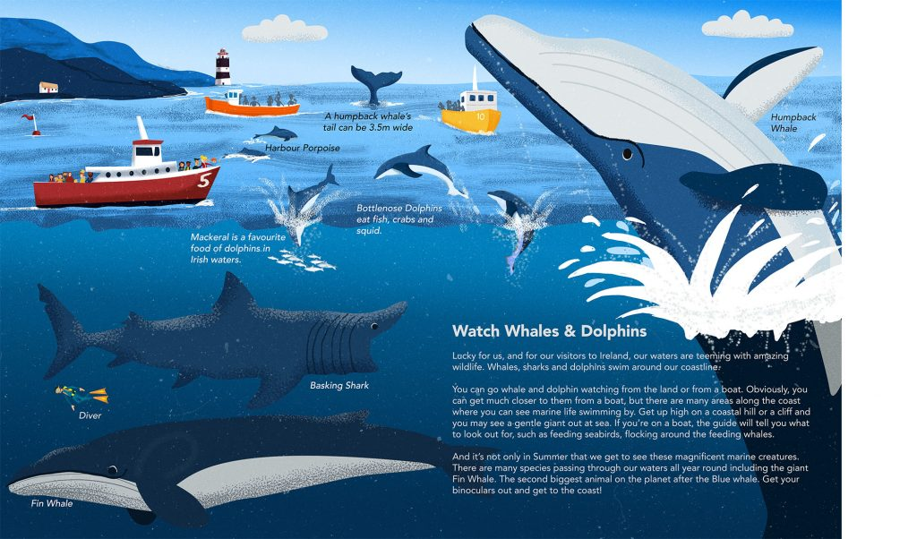 Dolphin & Whale Watching Illustrated By Jennifer Farley From The Book Island of Adventures