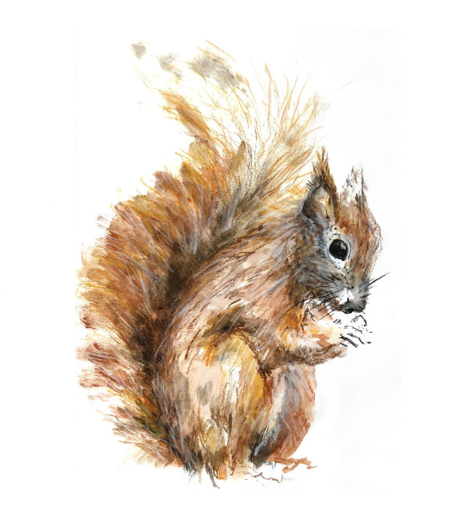 Louise-Naughton-Illustration-Red-Squirrel