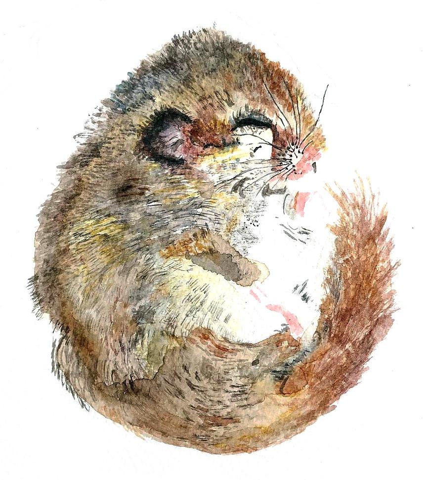 Louise-Naughton-Illustration-sleeping-mouse