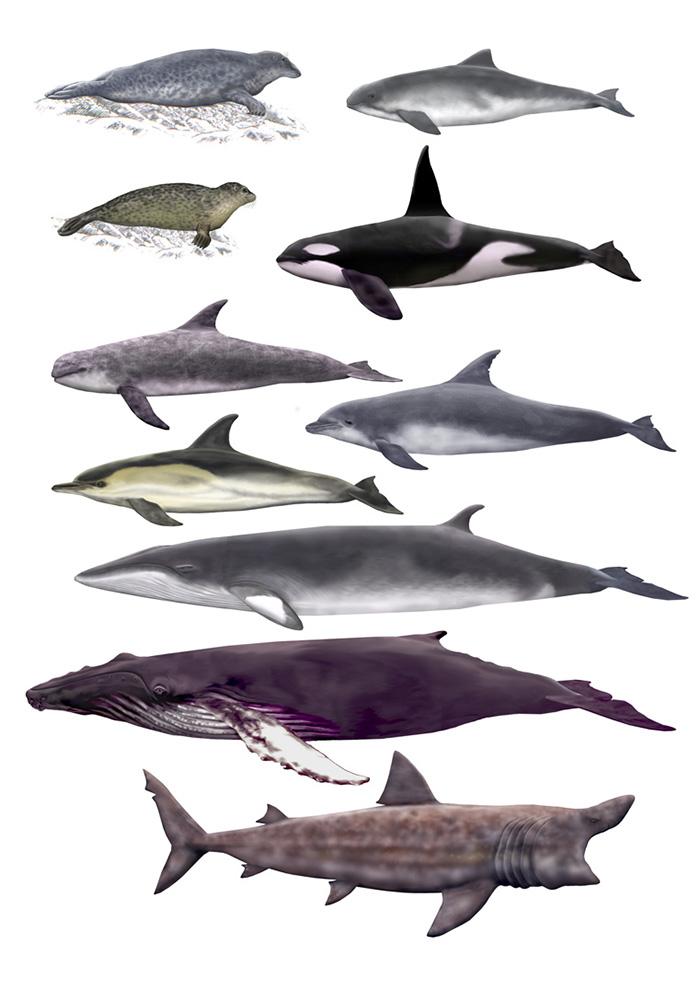 W.Helps-ocean-giants-illustrations