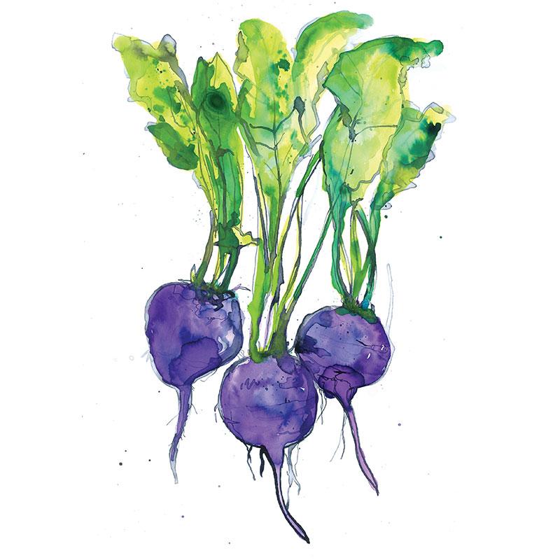 Eva Kelly Beetroot Vegetable Watercolour