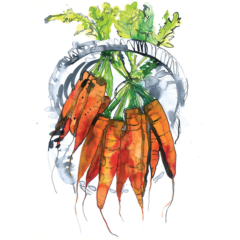 Eva Kelly Carrot Bunch Watercolour