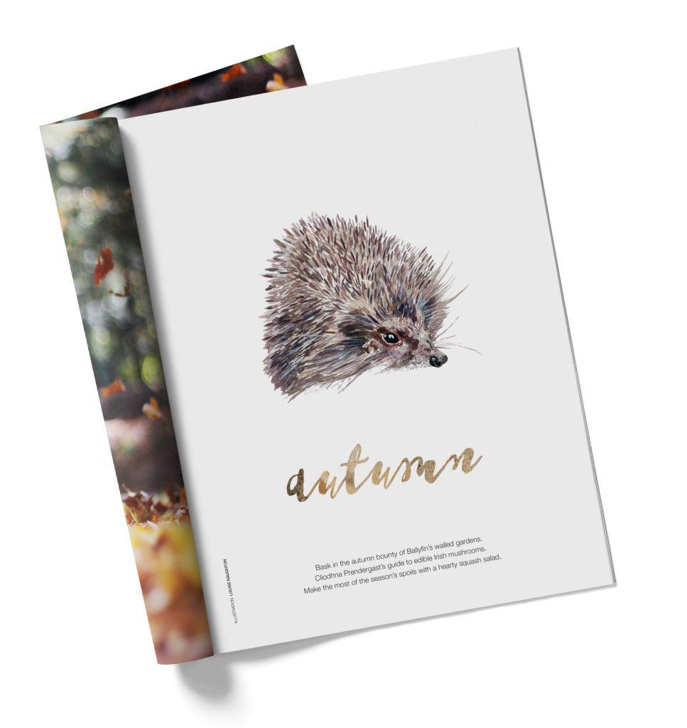 Louise-Naughton-Illustration-Editorial-Hedgehog